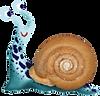 Snails-10.png