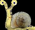 Snails-13.png