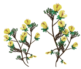 Flowers-09.png