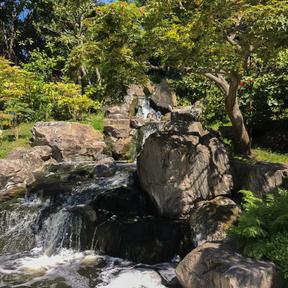 Anisa- Kyoto Garden- 3.6.21.tif