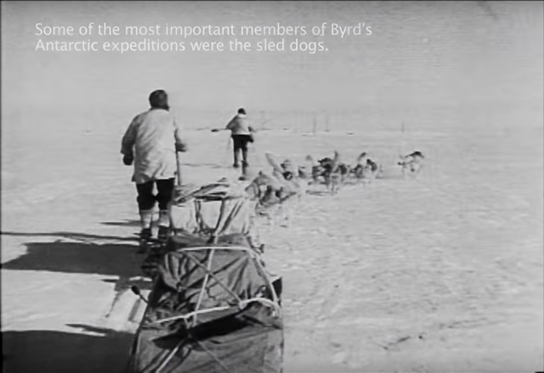 Admiral Byrd and The Dogs of His Expeditions  (0:02:40)