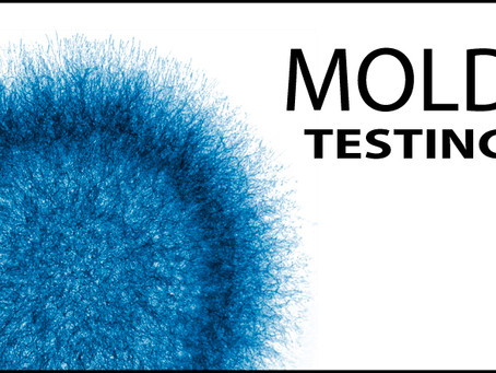 Mold Inspection - When should you get one?