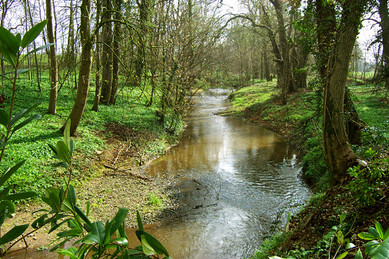 Emral Brook