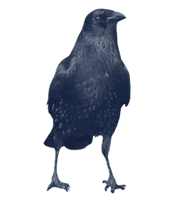 crow_edited.png