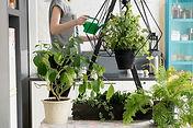 Plantas naturales de interior y exterior, podra escoger la planata y nosotros la enviaremos a la ciudad de valencia. Regalar plantas es regalar vida.