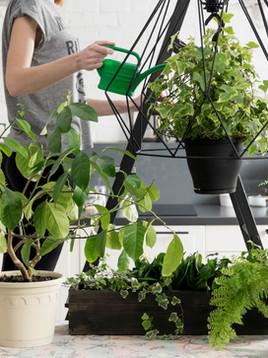 Bitki Yetiştirmek Bize Ne Öğretiyor?