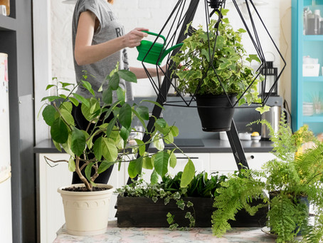 Indoor Gardening helps promote mindfulness, happiness & creativity!