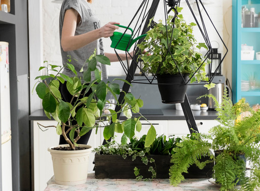 How to Incorporate Gardens in Home Design