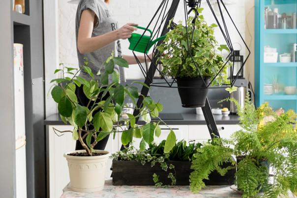 Plantas e Pandemia