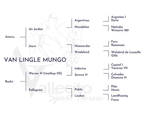 VAN LINGLE MUNGO (1).png