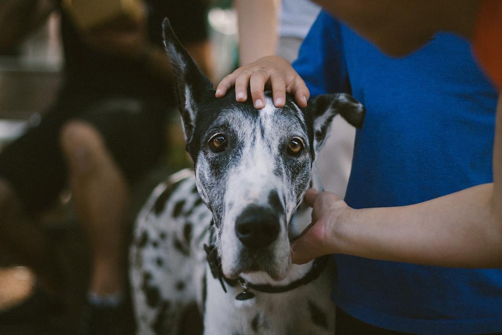 Abrigo de cachorro