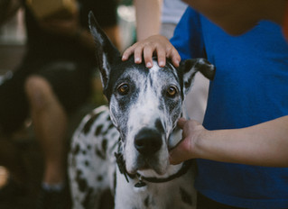 """""""Put your hand out so they can sniff,"""" is NOT what to do when you meet a new dog."""