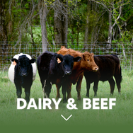Dairy & Beef.png