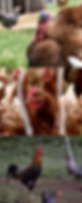 Poultry-compressor_edited_edited.png