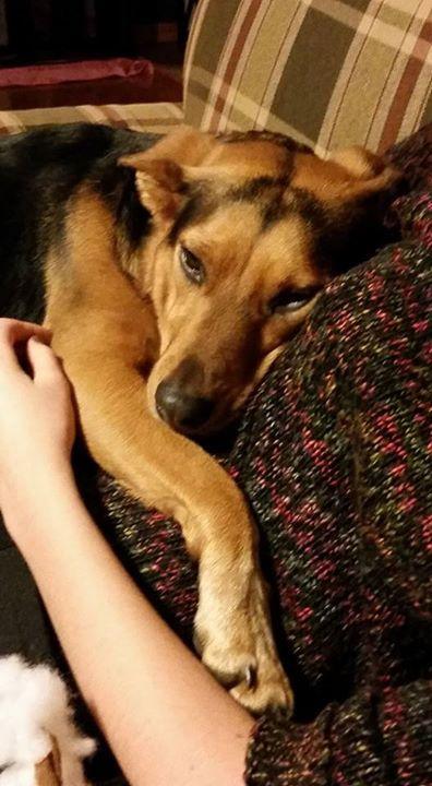 Sheba would like to sleep with her favor