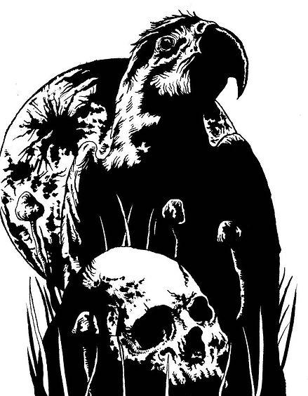 black parrot.jpg