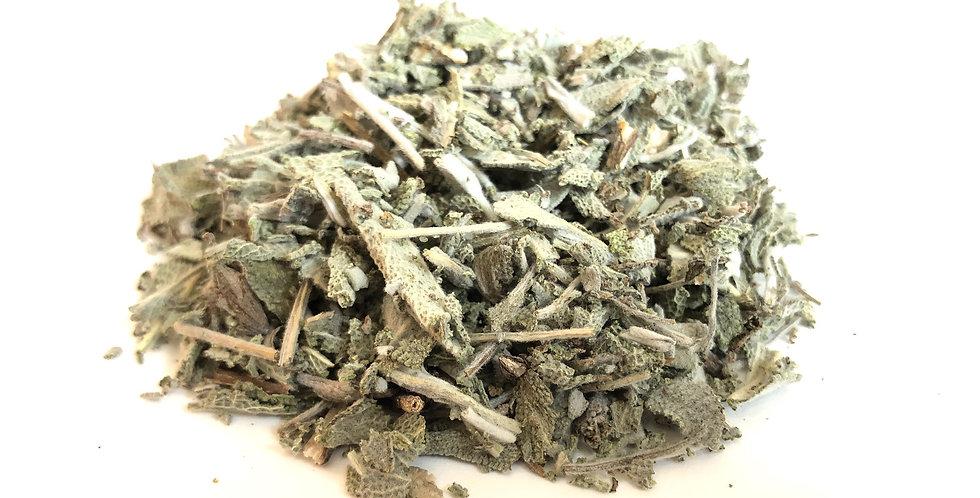 """Sauge """"Salvia officinalis"""""""