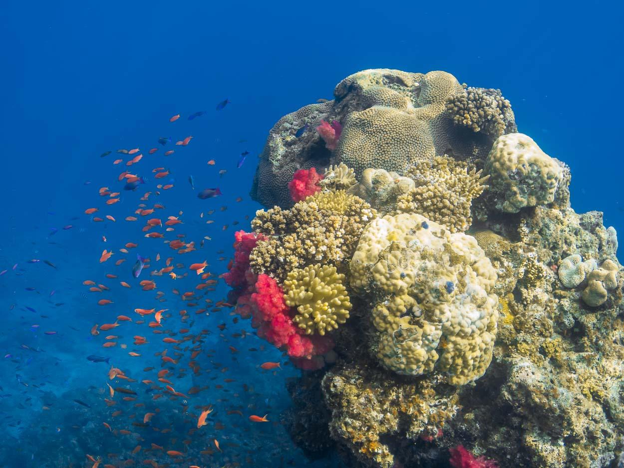 Pristine coral reef, Natewa Bay