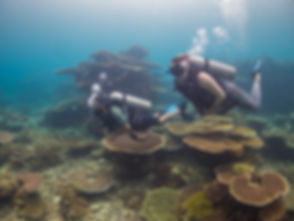 Best Diving in Savusavu Fiji.jpg
