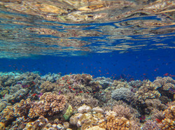 Sheltered waters, Natewa Bay, Fiji