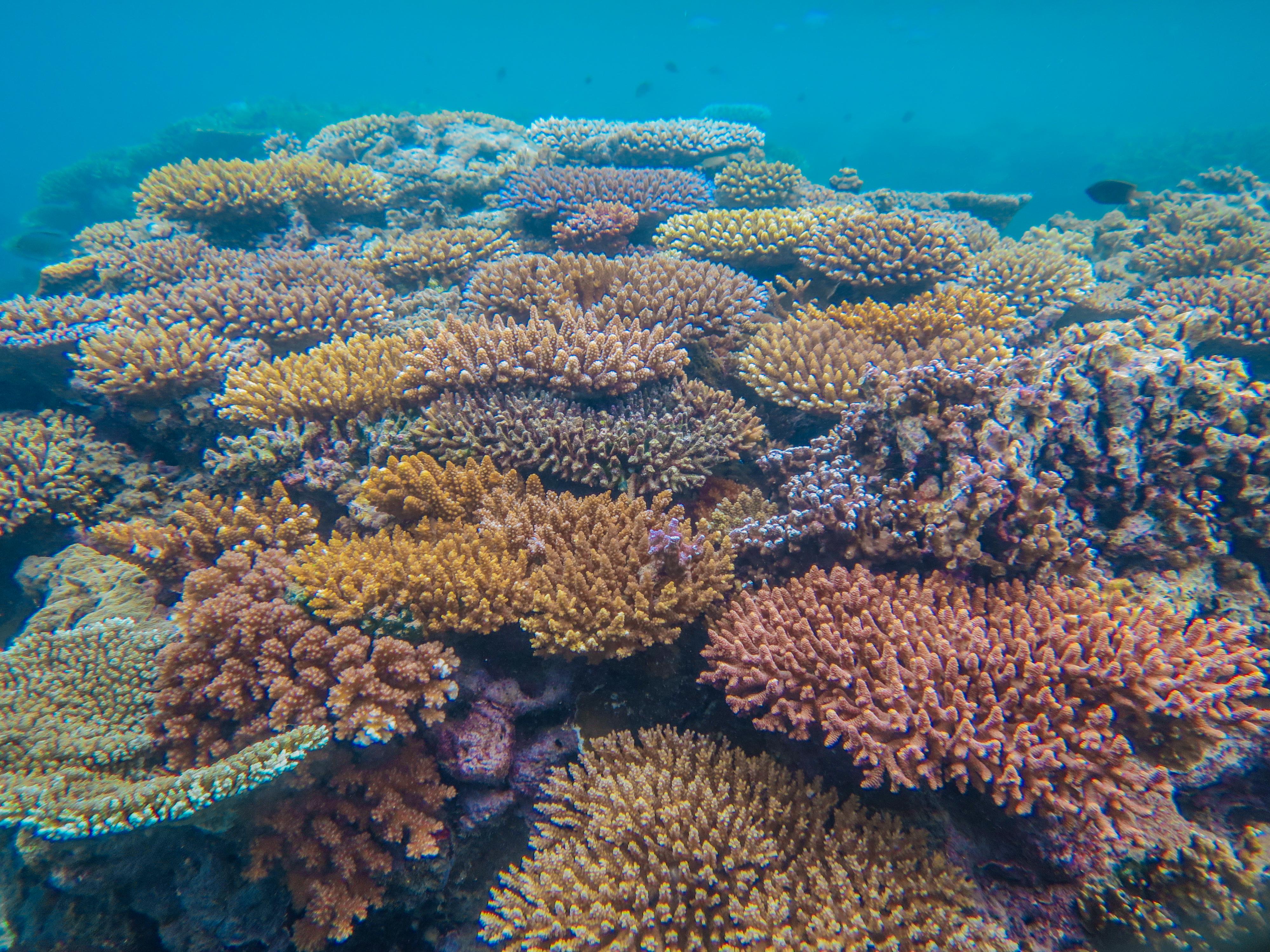 Vibrant coral reef, Natewa Bay, Fiji