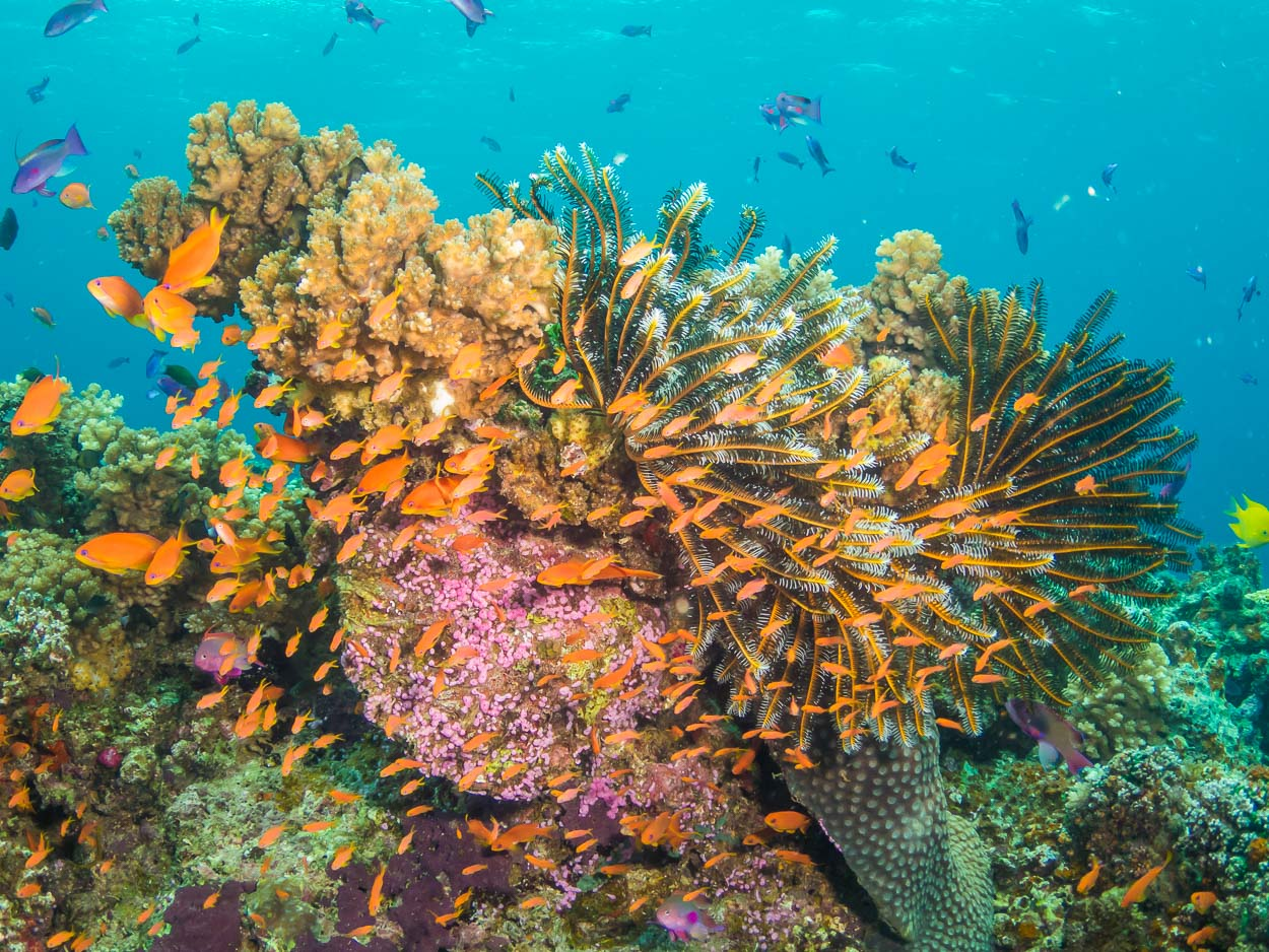 Healthy coral reef, Natewa Bay, Fiji