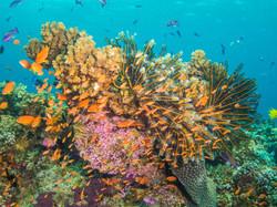 Healthy coral reef, Natewa Bay, Fiji