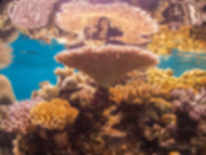PADI South Pacific Coral Reef Ecology di