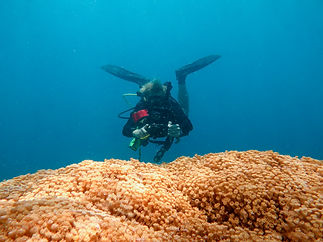 Scuba Diving Natewa Bay Savusavu Fiji.jp