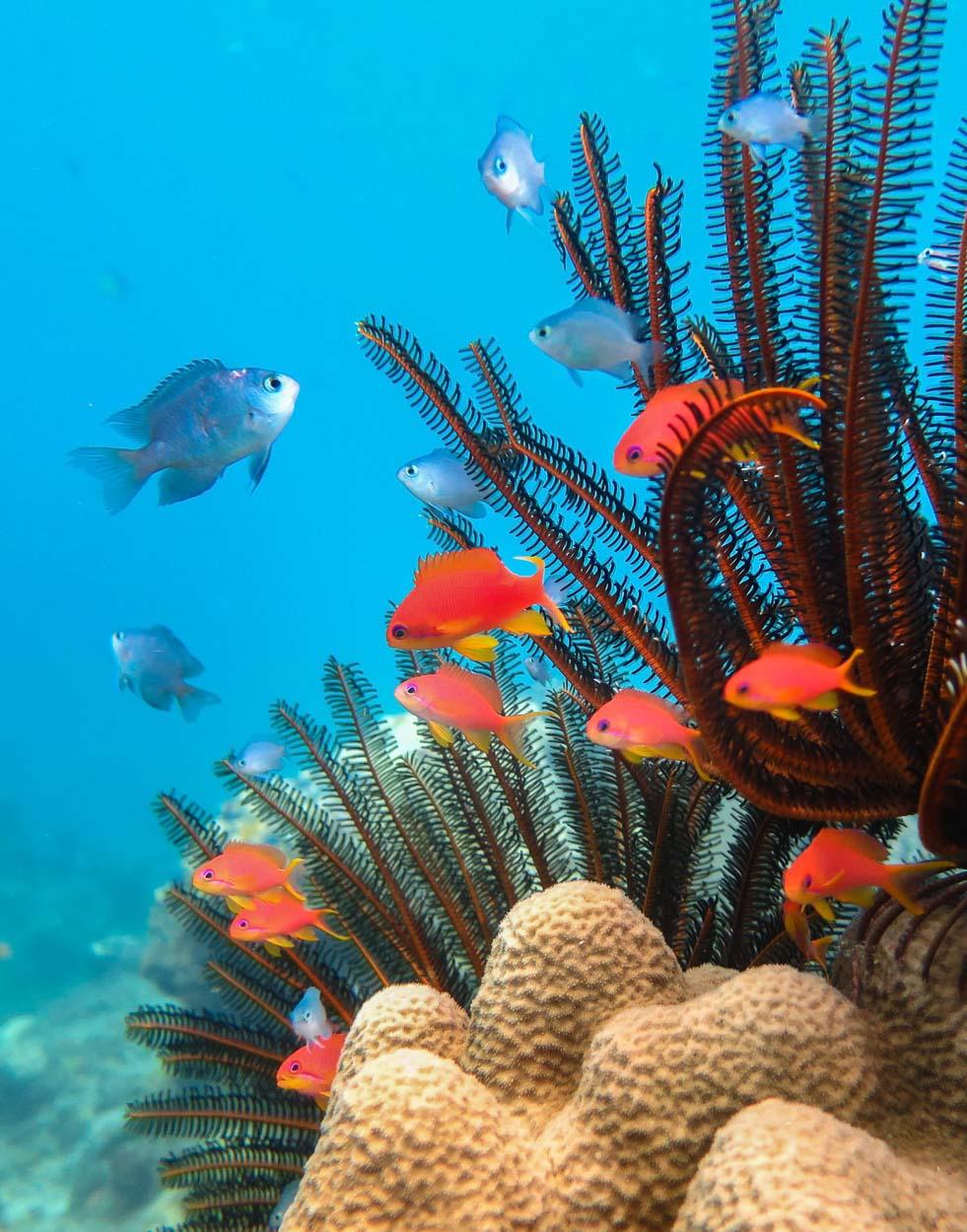 Reef life, Natewa Bay, Fiji