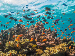 Fish life, Natewa Bay, Fiji