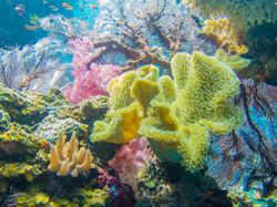 Soft corals, Natewa Bay, Fiji