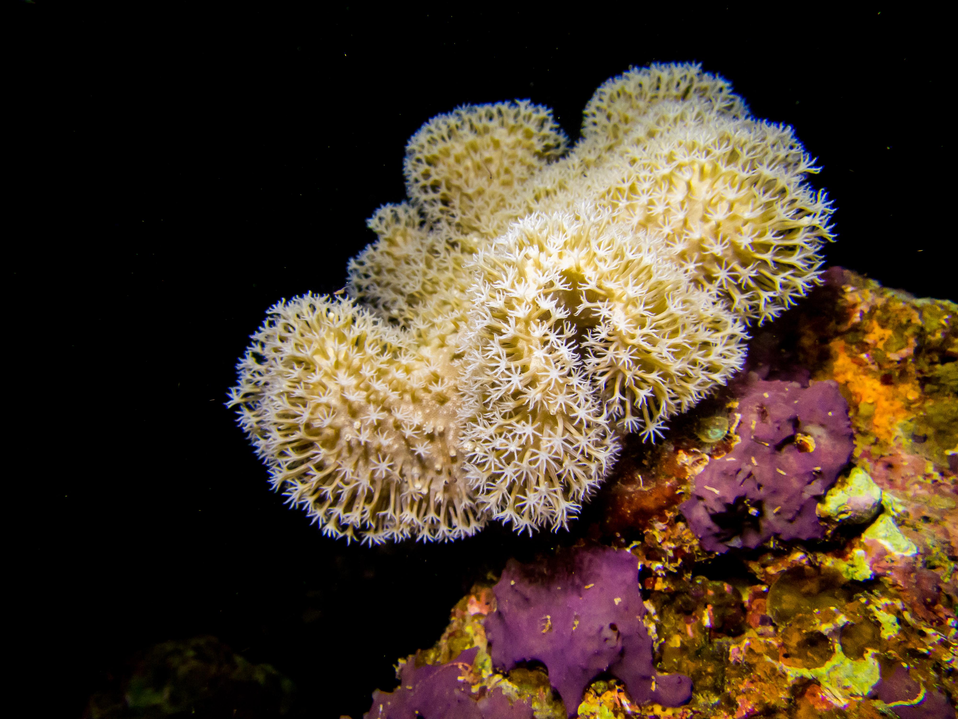Soft coral, Natewa Bay, Fiji