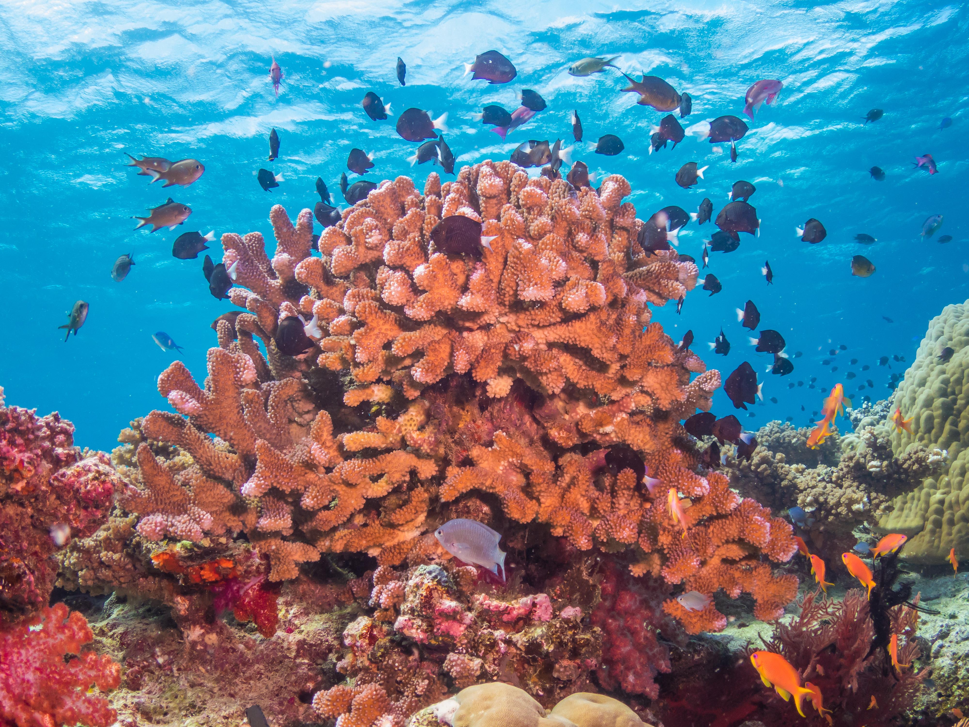 Coral reef, Natewa Bay, Fiji