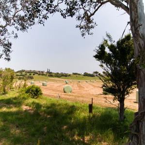 Milton Pasture