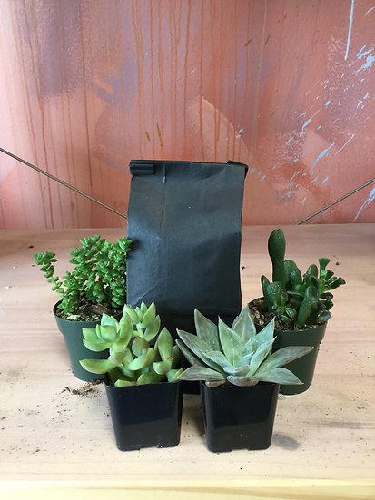 "Assorted 2"" succulents + soil"