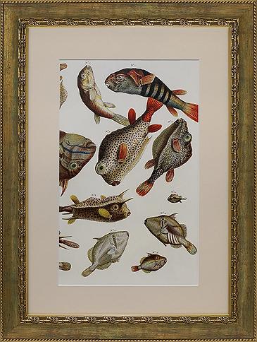 Обитатели глубин | Литография | Artmagic gallery | галерея Артмагия | Категории | каталог | art.vin