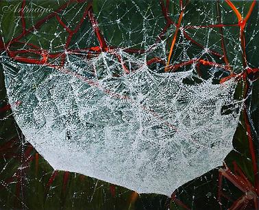 Паутина | Михаил Балавадзе | Mihail Balavadze | грузинский худодник | купить картину в Москве | Артмагия | Artmagic | art.vin