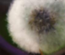 Одуванчик | Михаил Балавадзе | Mihail Balavadze | грузинский худодник | купить картину в Москве | Артмагия | Artmagic | art.vin