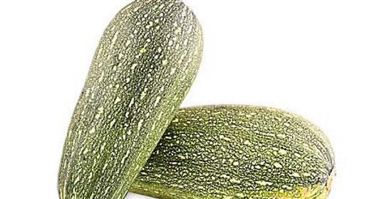 Zapallo Italiano Zucchini