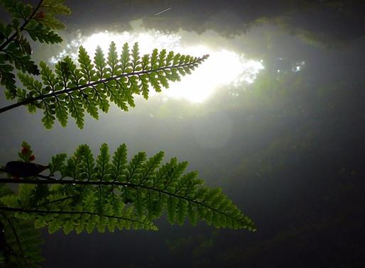 Lost World Adventure: Waitomo Glowworm Caves