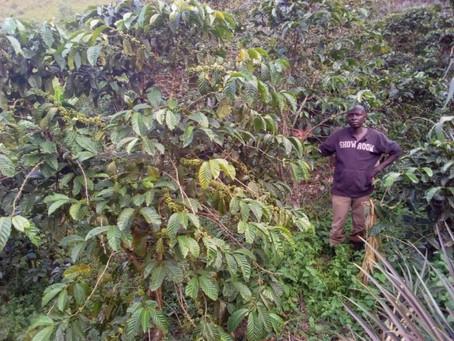 Gordon - Utungamo, Uganda