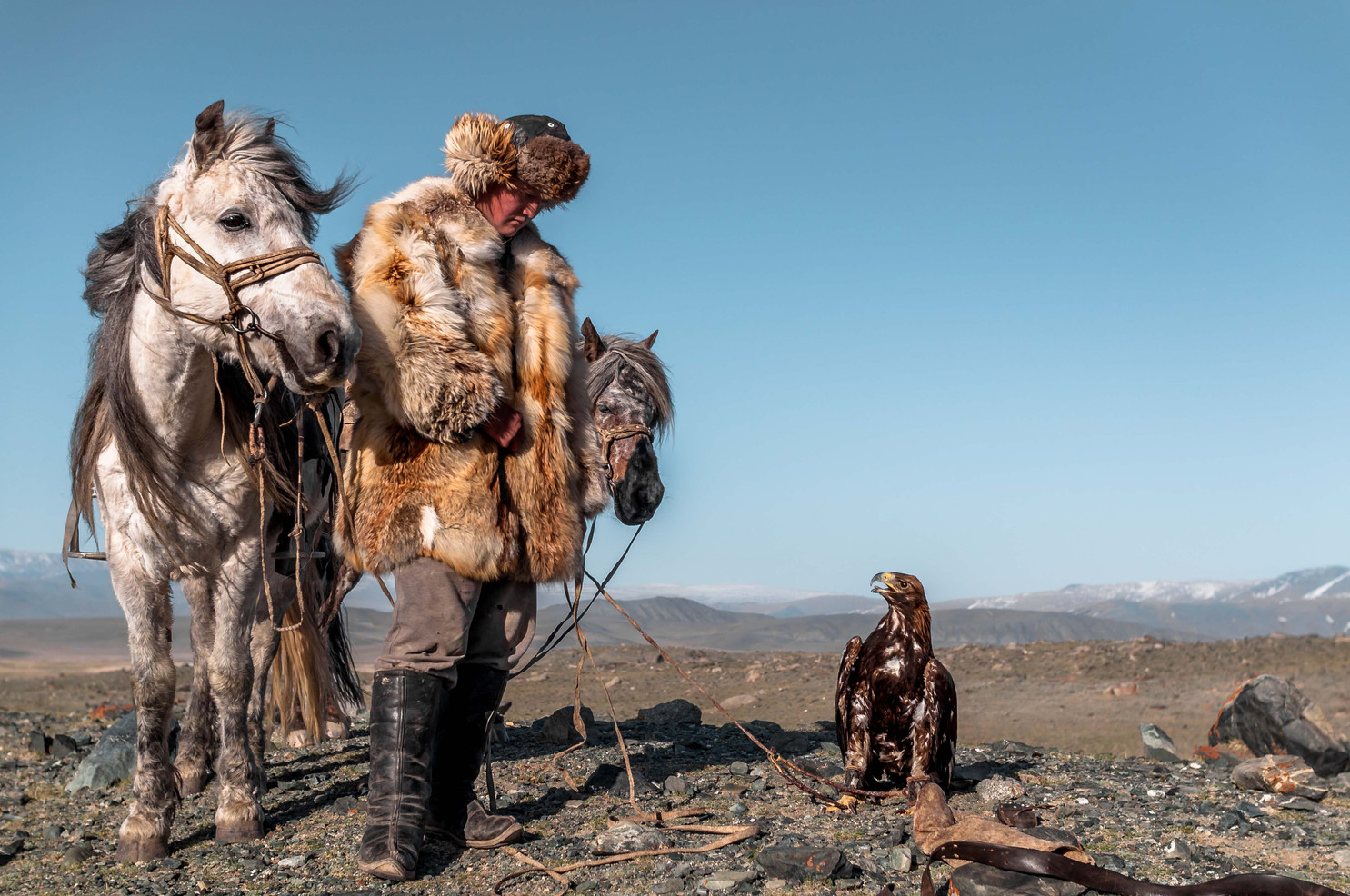 28 year old eagle hunter Esen with his horses and golden eagle. Living high in the Altai Mountains of western Mongolia, him and his family are among the last of the thousand year tradition of eagle hunting.
