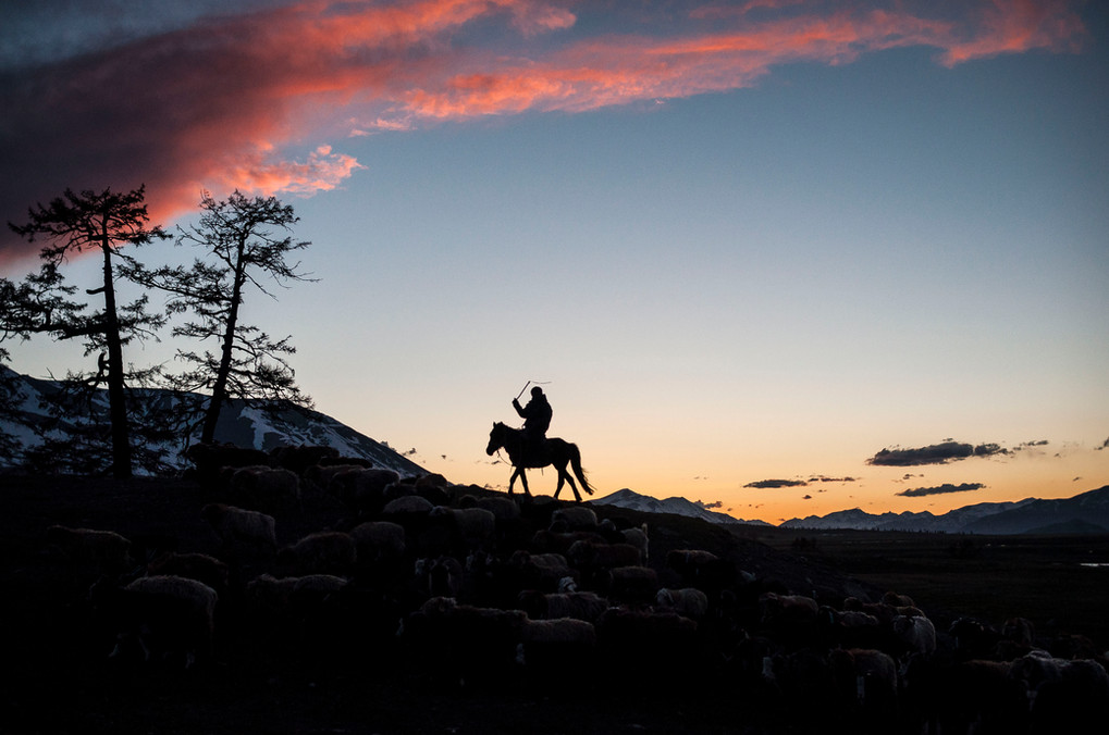 At dawn the next morning, Esen is already out herding the livestock to a fresh field of grass.