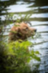 Sage water 5 mos.jpg