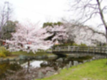 東綾瀬公園.JPG