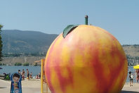 On Okanagan Beach, Behind The Peach!