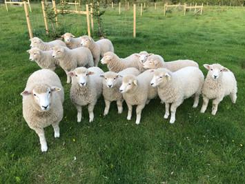 Meet the Flock