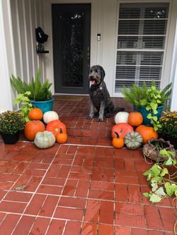 Pumpkin Delivery Alamo Heights 4