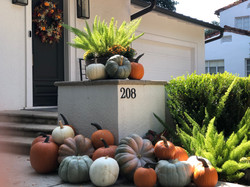 Pumpkin Delivery Alamo Heights 13